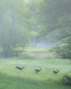 This picture is beautifully done ~ The scenery & the deer are quite breathtaking