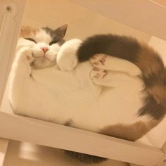 Things that make you go AWW! Like puppies, bunnies, babies, and so on. A place for really cute pictures and videos! Cute Baby Cats, Cute Little Animals, Cute Funny Animals, Funny Cats, Fluffy Animals, Animals And Pets, Cool Cats, I Love Cats, Gatos Cool