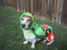 Michelangelo Dog Costume