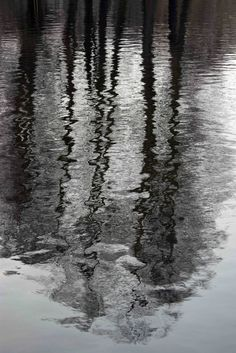 Reflection of trees in a pond. Looks almost like a black & white picture.