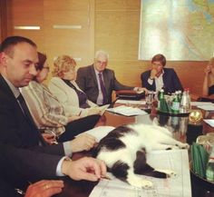cat says this meeting is boring