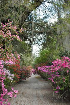 Natural entrance to a garden. Magnolia Plantation in South Carolina