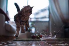 Photos de chats, faites au bon moment .. Discussion sur LiveInternet - service russe des journaux en ligne