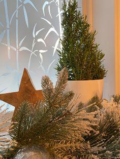Rosemary Christmas Tree, Plants, Plant, Planets