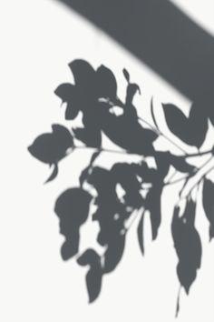 Rainbow Aesthetic, Nature Aesthetic, White Aesthetic, Backgrounds Free, Aesthetic Backgrounds, Aesthetic Wallpapers, Shadow Play, Shadow Shadow, Shadow Tree