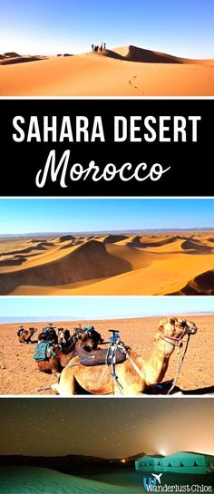 Sahara Desert, Morocco. From camel rides and stargazing to epic adventures on the sand dunes, enjoy Morocco's Sahara Desert. https://www.wanderlustchloe.com/moroccan-adventures-the-sahara-desert-stargazing-and-camel-treks/