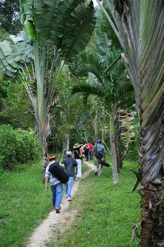 Hiking into IZE's Blue Creek Rainforest Lodge