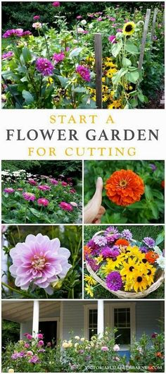 My favorite flowers for a cutting garden! Easy to start, blooms all season long, great for cutting and filling your garden with color! Dahlia, zinnia, sunflower, daisy, and other hardy, low-maintenance plants with LOTS of flowers. #flowergardening