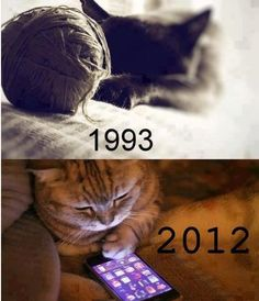 Nerdy kitties.
