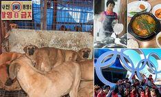 Secret South Korea dog meat trade Olympics bosses don't want seen