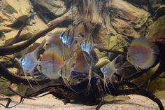 Aquarium.fr's photo.
