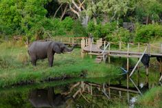 """Exploring Ecotourism In The  Okavango Delta - a wonderful article featuring Xigera in latest Longevity Magazine...    """"Camps like these consistently observe recognised sustainable tourism practices. Therefore, they provide a life-changing safari experience in remote, fragile areas."""""""