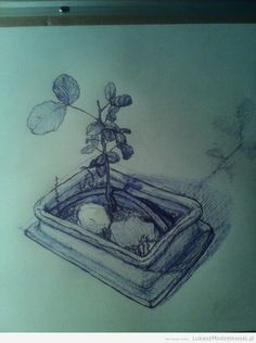 Normal view. Done sketch. #bonsai #sketch #drawing #szkic