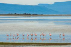 Pink Flamingos by Lisa Bettany