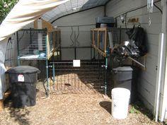 HFI Forum :: Topic: My new chickens! (2/2)
