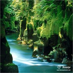 Feel untouched nature at the Whirinaki Forest in #NewZealand! #BeautyAtItsBest