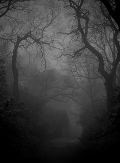 Would love to wander around here, reminds  me of English countryside in the winter when there is no colour left in the world