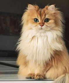 Nice little cats for every day Cute Cats And Kittens, Cool Cats, Kittens Cutest, Animals And Pets, Baby Animals, Cute Animals, Pretty Cats, Beautiful Cats, Animals Beautiful