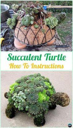 DIY Succulent Turtle Topiary Instruction- DIY Indoor #Succulent #Garden Ideas Projects