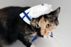 Pet Costume: Little Sailor, $15