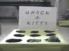 Whack-a-Kitten (gif)