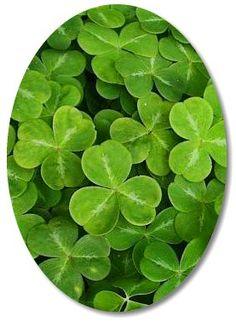 St patricks day and irish quotes on pinterest st patrick 39 s day st patrick 39 s day and clovers - Shamrock indoor plant ...
