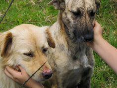 I cani hanno sentimenti state quindi attenti ai vostri comportamenti e agli effetti che hanno sul vostro cane, perché anche il vostro cane ha dei sentimenti.
