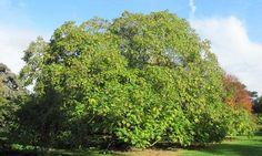 Arbre qui pousse vite : notre top 10 des arbres à croissance rapide Blue Shrimp, Tree Photography, Photo Tree, Flower Seeds, Permaculture, Herb Garden, Planting Flowers, Pergola, Nature