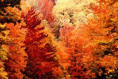 Autumn colors by Daniel Sorine Via Flickr: Pocono Mountains. Fall 1993.