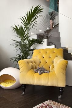 The chair looks bloated but blissful! And the color banana! Don't forget to move the cat!