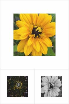 Assortment of images of Rudbeckia flower Flowers, Plants, Image, Products, Plant, Royal Icing Flowers, Flower, Florals, Gadget