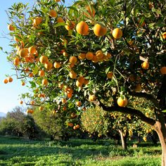 Growing a variety of fruit trees doesn't require a ton of space, and can be accomplished in an average-sized backyard with the right skill set.