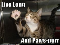 live long and paws-purr