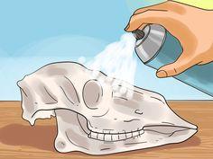 Image titled Preserve a Skull Step 9 Deer Skull Decor, Deer Hunting Decor, Painted Animal Skulls, Cow Skull Art, Hunting Dogs, Horse Skull, Coyote Hunting, Turkey Hunting, Sculpture Sur Os