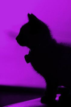 Black cat silhouette on purple