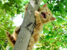 I'm afraid - on http://iam.cat #lolcat