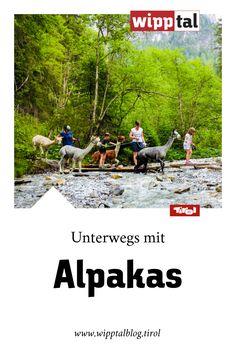 Endtecke die Welt der Alpakas bei einer gemütlichen Wanderung in den Bergsteigerdörfern Gschnitztal und Schmirntal. Mehr Infos auf unserem Blog. Blog, Movies, Movie Posters, Alpacas, Mountain Climbing, World, Films, Film Poster, Blogging