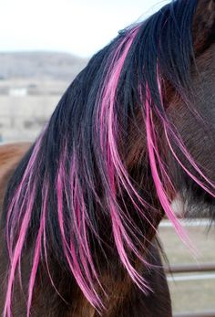 Mane  Tail color extensions,wow this looks awesome,i might hav to try this with my horses...