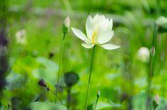 In a lotus pond by Masashi Bon