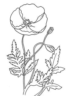 Poppy, Remembrance Day with Poppy Coloring Page: Remembrance Day With Poppy Coloring PageFull Size Image