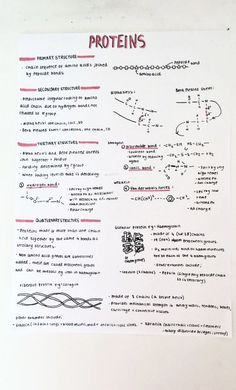 level revision notes on proteins, amino acids and biological molecules. notes A-level biology notes; proteinsA level revision notes on proteins, amino acids and biological molecules. notes A-level biology notes; Ap Biology, Gcse Biology Revision, Biology College, Biology Lessons, Science Biology, High School Biology, Earth Science, Biology A Level, How To Study Biology