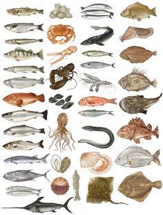 Katie Scott Illustrator Realism Fish