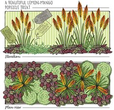 Lisa Orgler Design: MY LAST SWEET PLANT COMBO
