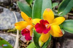 Stefanodav's Shot-Blog: Colour explosion...  #stefanodav #kauai #hawaii #iamnikon #nikonphotography #travel #travelphotography #blogger #beutifulplace #placetovisit #usa #fiore #fiori #flower #flowers #nature #color #beautiful