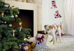 Weihnachten naht mit Riesenschritten. Um dem üblichen Einkaufsstress vorzubeugen, wollen wir Ihnen mit 24 schönen Geschenk-Ideen für Gärtner die Suche erleichtern. Lassen Sie sich inspirieren!