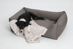 New In! Hundesofa Box Bed Saddle aus feinstem Nappa ähnlichem Art Leder. Frisch aus der Manufaktur DOGS in the CITY