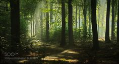Greens by npieters. Please Like http://fb.me/go4photos and Follow @go4fotos Thank You. :-)