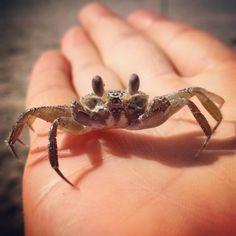 Making new friends! :) #mexico #veracruz #tecolutla #crab #sealife #trip #adventurer #backpackerlife #traveler #nature #naturaleza #cangrejo #aventura #viajeros #mar