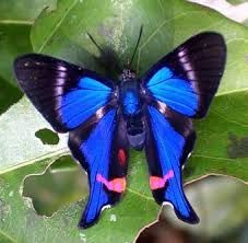 jungle butterflies - Google Search