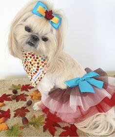 Bella Model, Teddy Bear, Toys, Animals, Fashion, Activity Toys, Moda, Animales, Animaux